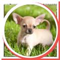xxs-dogs-blog