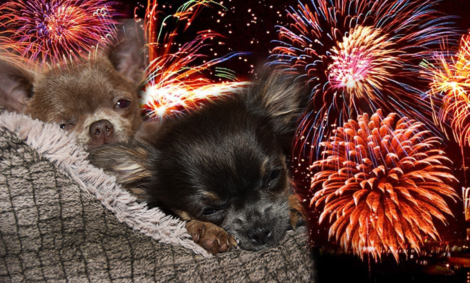 Helping Your Pets Cope With Fireworks