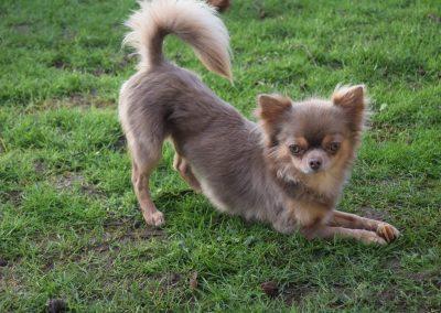 Pablo – Chihuahua